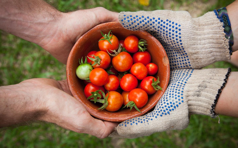 lobalisierung und Landwirtscha