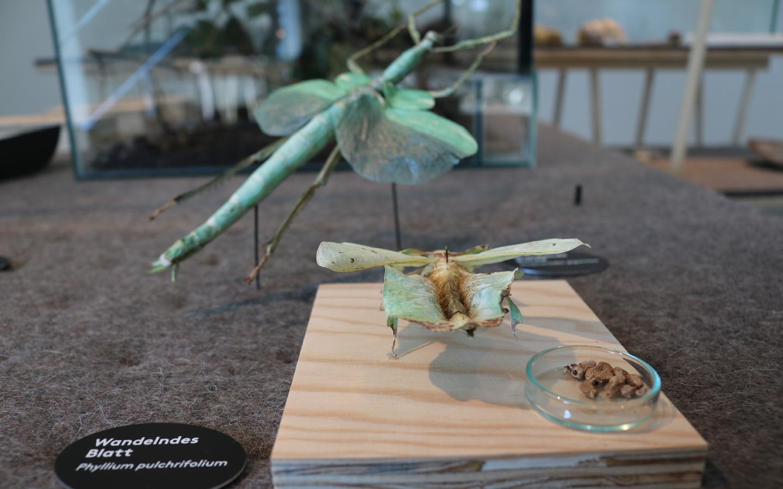 underwelt der Insekteneier