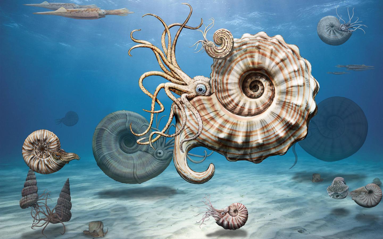 reide-Ammoniten aus dem Alpste