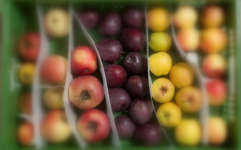 eschmacksbegegnung Apfel –