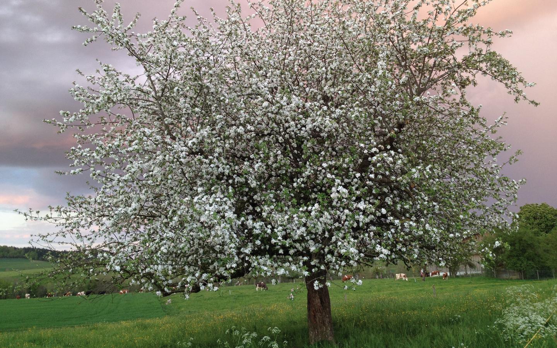 om Kern zum Baum – wie ein W