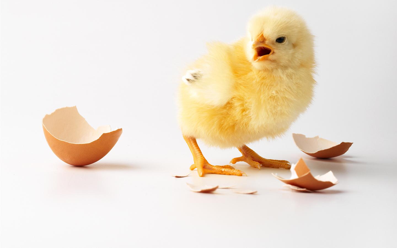 llerlei rund ums Ei