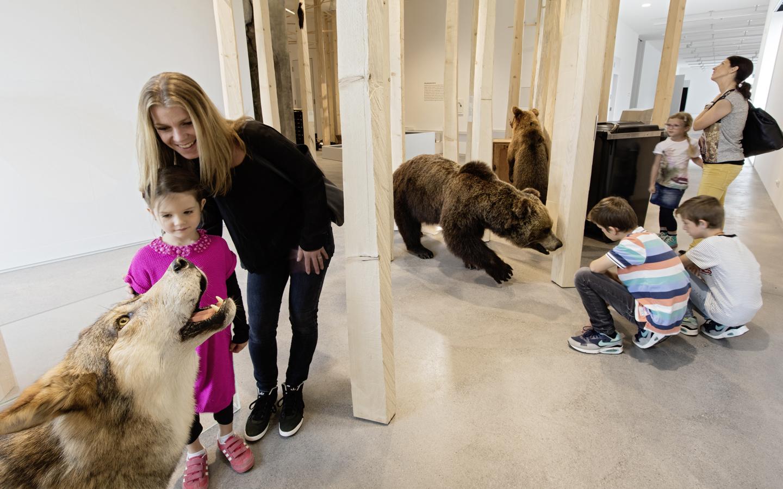 m Reich des Bären