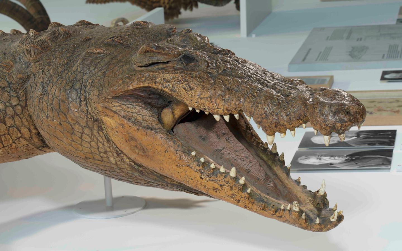 in Krokodil auf Reisen - wie d