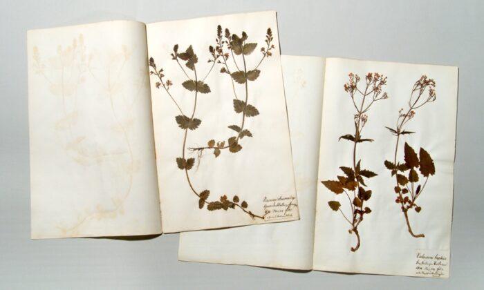 _Pflanzen_505